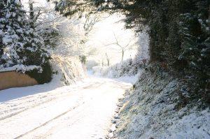 Snow in the avenue